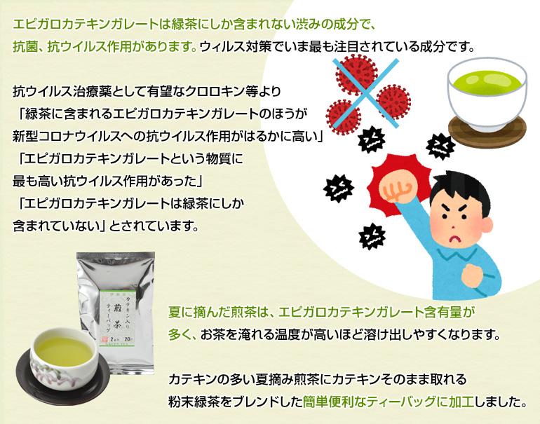 エピガロカテキンガレートは緑茶にしか含まれない渋みの成分で、抗菌、抗ウイルス作用があります。
